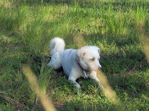 一休み中の犬