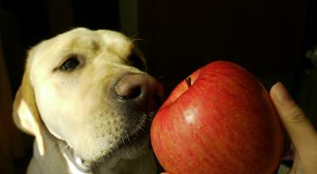 リンゴ食べる?