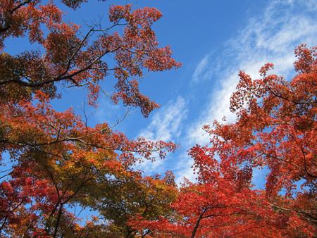 蒼い空に紅葉が映える