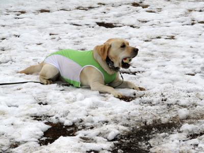 雪でも遊ぶ