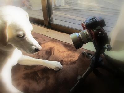 ひなとカメラ
