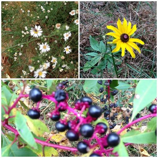 1012 Wild flowers