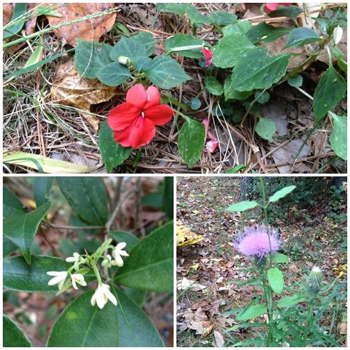 1012 Wild flowers 2