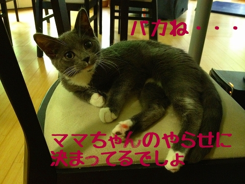IMG_0293_20120920110213.jpg