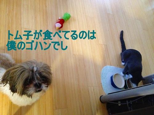 IMG_0365_20121002113037.jpg