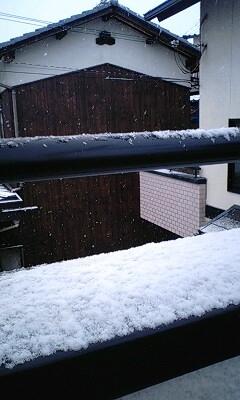 雪降ってる~