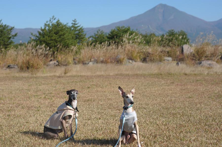 磐梯山と犬