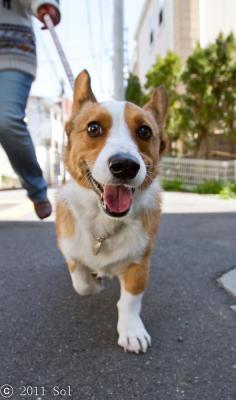 えへっ。一緒のお散歩は楽しいな。