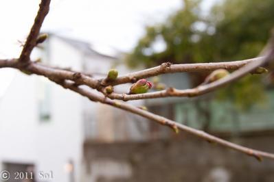 家の近くにも春がそこまで来てました!