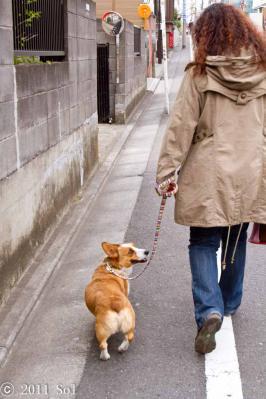 「お散歩楽しいよね~っ」 あ、見るタイミングまで一緒だぁ
