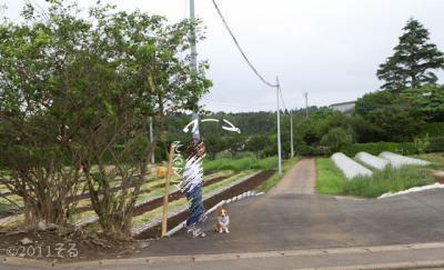 20110619-IMG_4600_1.jpg