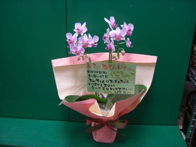 敬老の日 胡蝶蘭