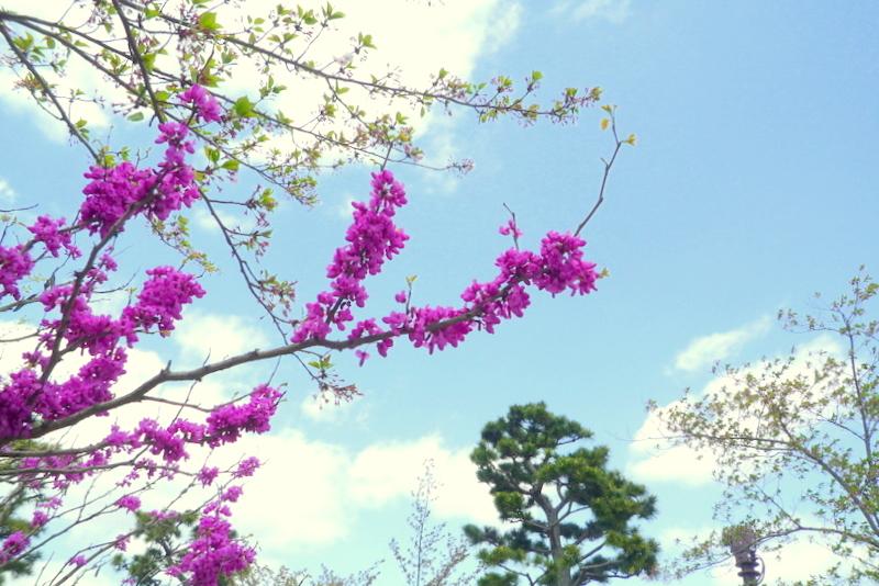 橘島の花2-3