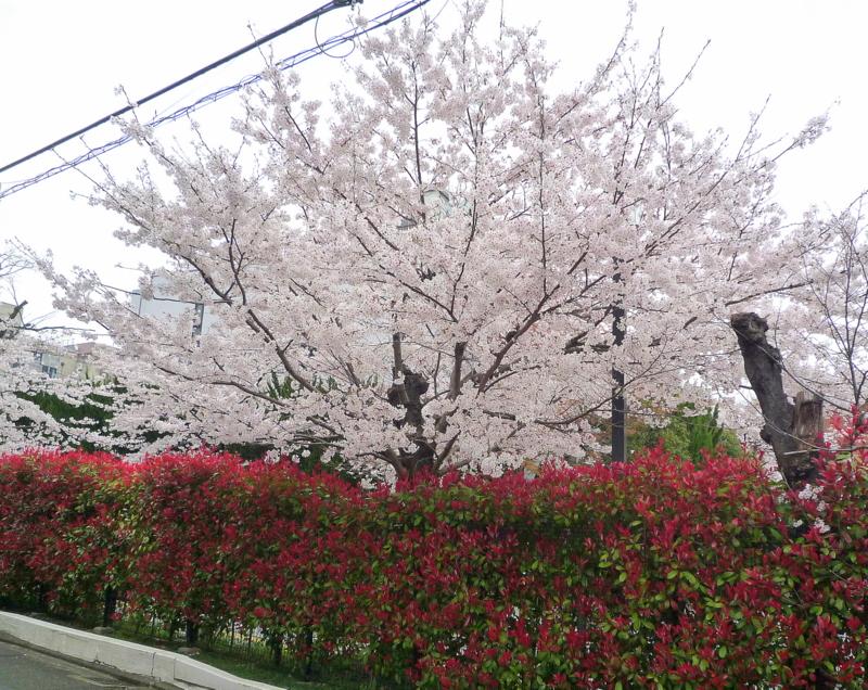 京都地方法務局7-1