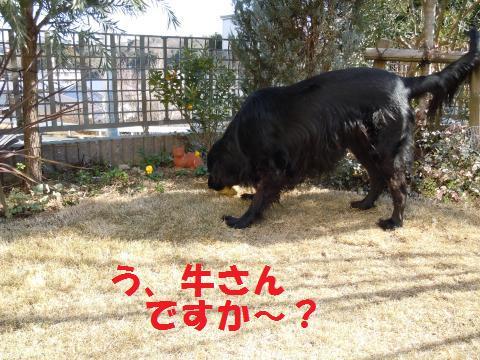 004_convert_20110121141627.jpg