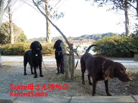 007_convert_20110121192527.jpg