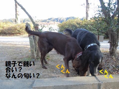 009_convert_20110121185710.jpg