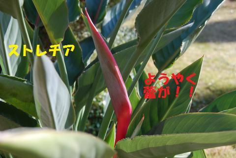 010_convert_20101224210044.jpg