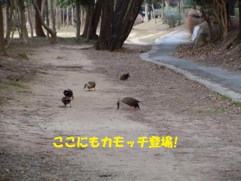 019_convert_20110112230146.jpg
