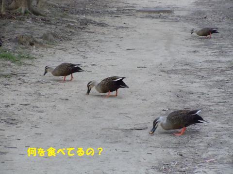 020_convert_20110112230306.jpg