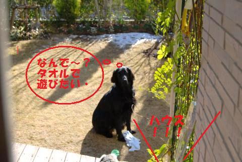 020_convert_20110117213255.jpg