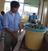 胡瓜を水洗いする