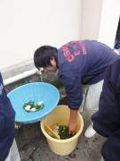 野菜洗浄1
