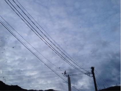 函館山に帰って来たカラス
