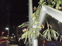 reSおやすみネムの木
