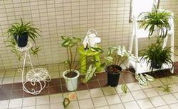 reS.爺と観葉植物