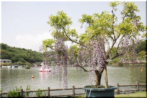 蓮華寺池公園♪