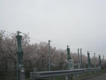 IMG_0247-201204.jpg