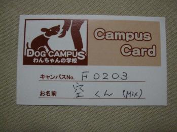 IMG_2031-201106.jpg