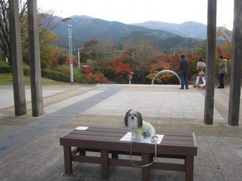 IMG_2781-201211.jpg