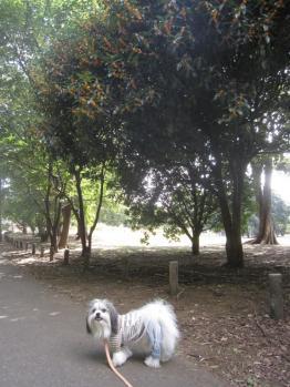 IMG_5438-201110.jpg