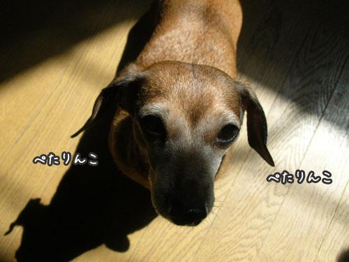 201009073.jpg