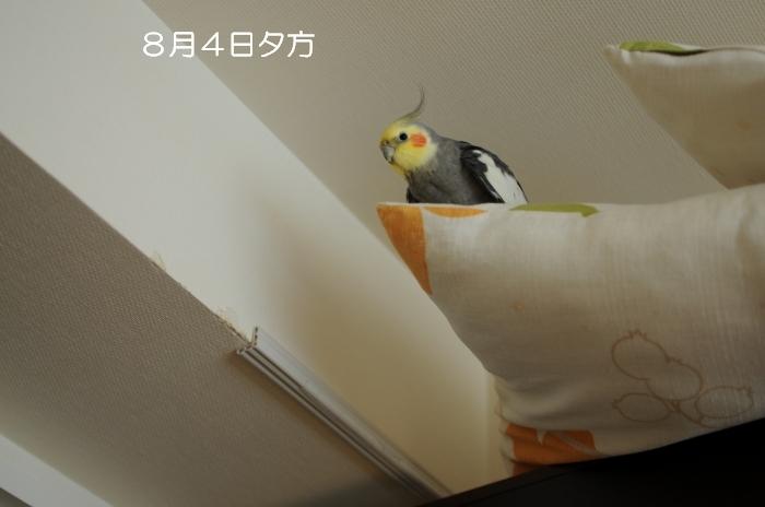 DSC_7696.jpg
