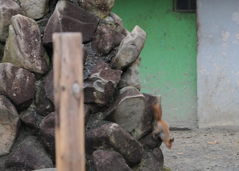 ezorisu20111120b.jpg