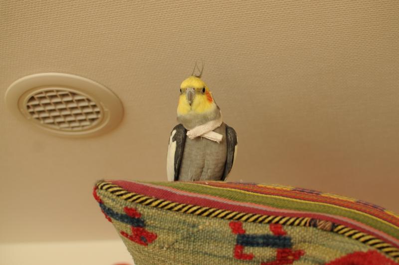 hinotsunokakushi20120707.jpg