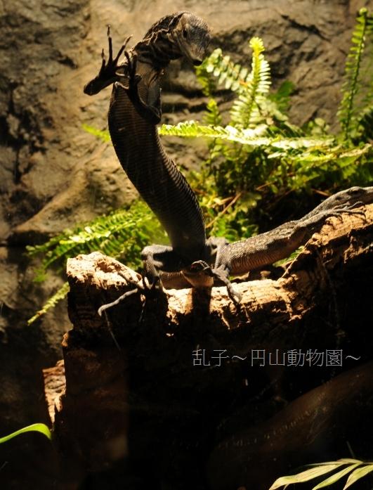 maruyama201109172.jpg