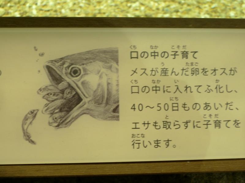 maruyamazoo20121208nettaijyouhou.jpg