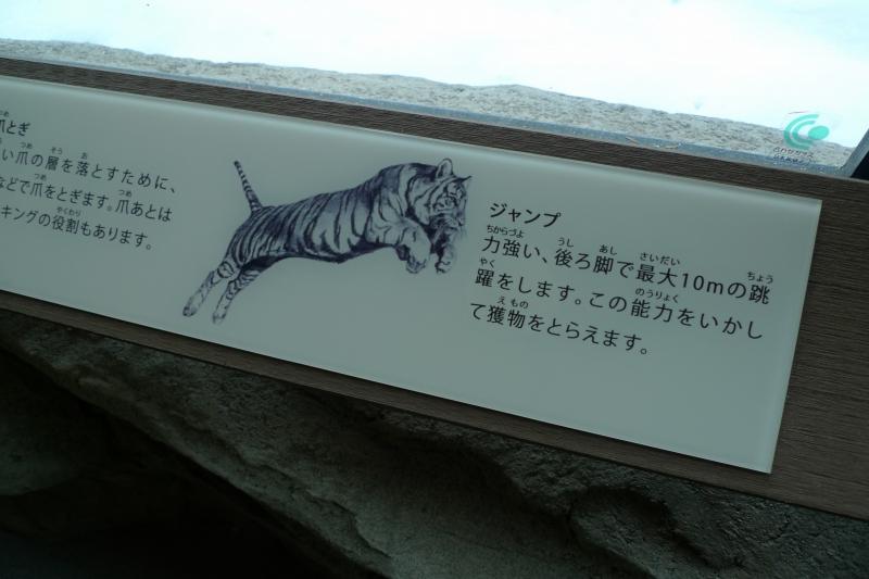maruyamazoo20121208torajyouhou2.jpg