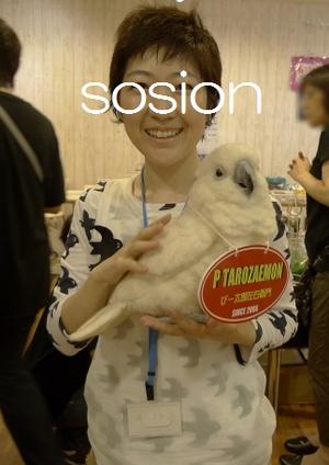 mofkita2011sosion2.jpg
