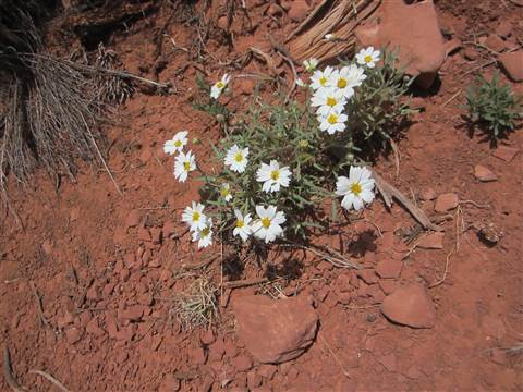 乾燥地帯に白いお花 201409