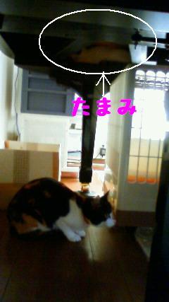 20101018-1_20101018103354.jpg