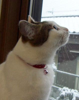 snowtama_1.jpg