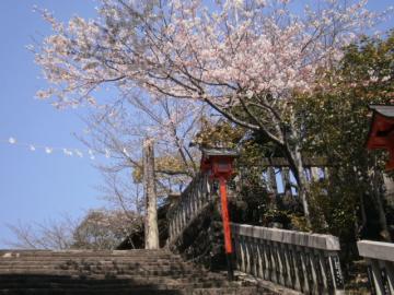 桜、咲きました