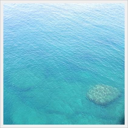 サンゴ透けてみえます