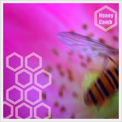 Honey ‐Comb