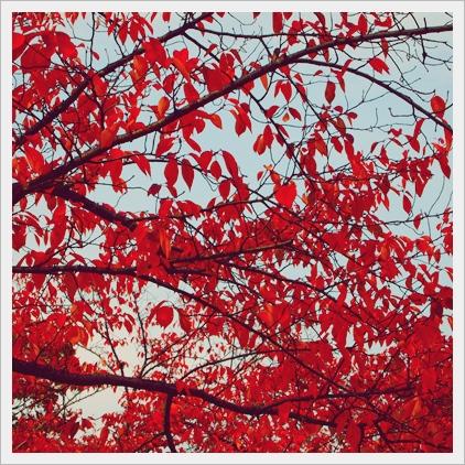 秋ですなぁ